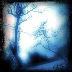 Kinskeho_Noir_Blue_square copy