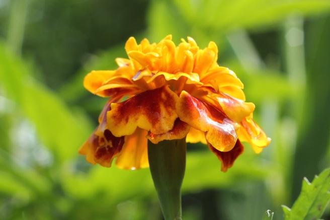 RadkaZKing_Yelloworange_garden