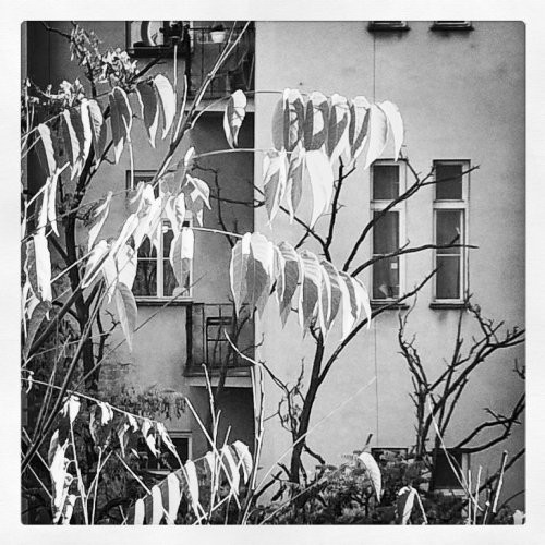 Autumn leaves in the courtyard Prague 2015 bw